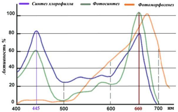 Два пика активности (синий и красный) на спектральной характеристике фитоламп